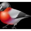 alitalf: (Birdy)