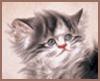 cats_shadow: (kitten)