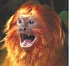 tamarinne: (excited monkey)