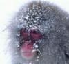 tamarinne: (grumpy snow)
