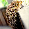 hedgie: (Default)