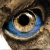 metemmods: (Modly Eye Upon You)