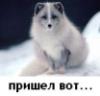 bara6asik: (пришел вот)