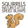 cynatnite: (Squirrels)