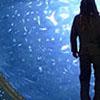 cynatnite: (Stargate)