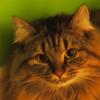 umadoshi: (kittens - Claudia - green wall)