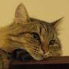 umadoshi: (kittens - Claudia - pensive)