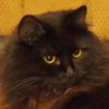 umadoshi: (kittens - Jinksy - focus)