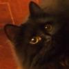 umadoshi: (kittens - Jinksy - looking up)