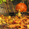 anonymous_sibyl: fall leaves and a pumpkin (Default)