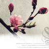 phlourish_icons: (Cherry Blossom)