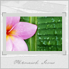 phlourish_icons: (flower1)