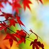 phlourish_icons: (Fall Leaves)