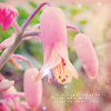 phlourish_icons: (Pink Flower Drop)