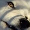 phanaeus: (Wolf Warning)