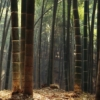 ananda: (Bamboo)