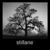 stillane: (Tree Me) (Default)