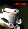 persimmonfrost: (caddy, cat, scanner)