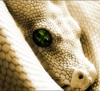 illian: (The Serpent)