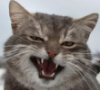 slipa_ol: (tomcat)