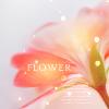 gentle_dream: (Beauty: Pink flower icon)