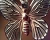 ptc24: (lepidopteran)