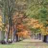 juleself: (autumn)