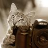 teigh_corvus: ([Misc.] Photography is tasty)