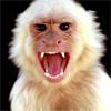 kirulya: (белая обезьяна)