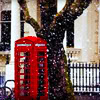 crunchysunrises: Red Phone Box Under a Tree While It's Snowing (phone box)