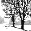 samjohnsson: The bare essentials (Winter Lane)
