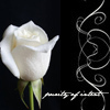 jenschmitadam: (white rose)