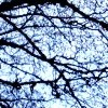 jetsilver: Photograph of bare tree branches against a winter sky. (Default)