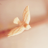 jessyj: (bird)