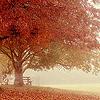 sazandra: (autumn view - coy-dreamer)