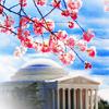 shutterbug: (Misc: Jefferson Blossoms)