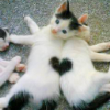 sweet_sparrow: Picture of two cats lying back-to-back with two black spots connecting to make a heart. (E: Heart)