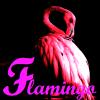 flamingoslim: Pink flamingo on black background (flamingo-black)