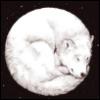 wolfslune: (wolf moon)