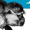 prog: (monkey)