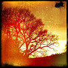 thedivinegoat: A heavily processed, (red, grungy filters) silhouette of an Oak Tree (My Photo - Oak)