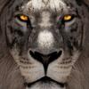 greylion: (lion)