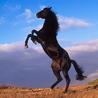 rider3099: (лошадка)