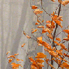 enemyofperfect: a spray of orange leaves against a muted background (gray autumn)
