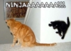 drivvenwrinth: Ninja Cat (Ninja Cat)