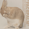 icewolf: (bunny facepalm)