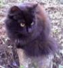 wdkeeper: (black cat)