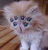 tsurupa: (котях)