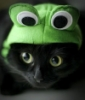 cat_and_frog_blog: (pic#8139032)