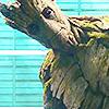 heisgroot: he is groot (i am groot)